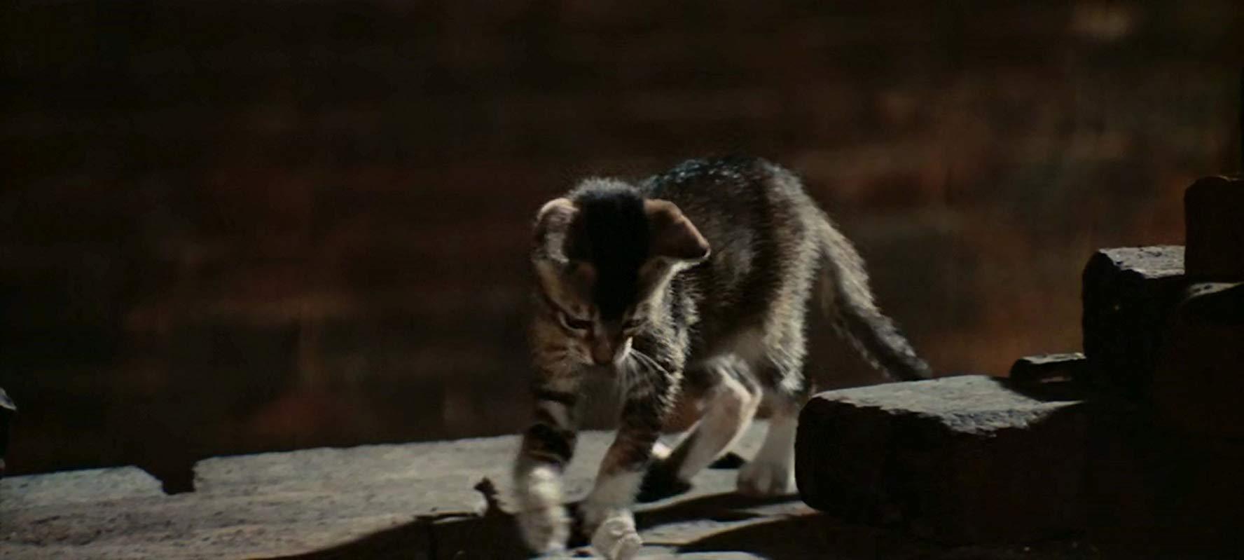 【考察】コロッセオでの対決シーンに登場する猫の意味するものとは